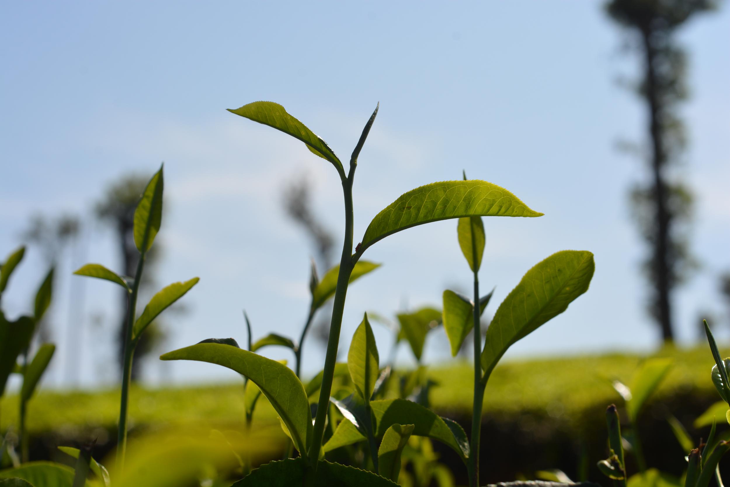 גינות מעוצבות עם דשא סינטטי